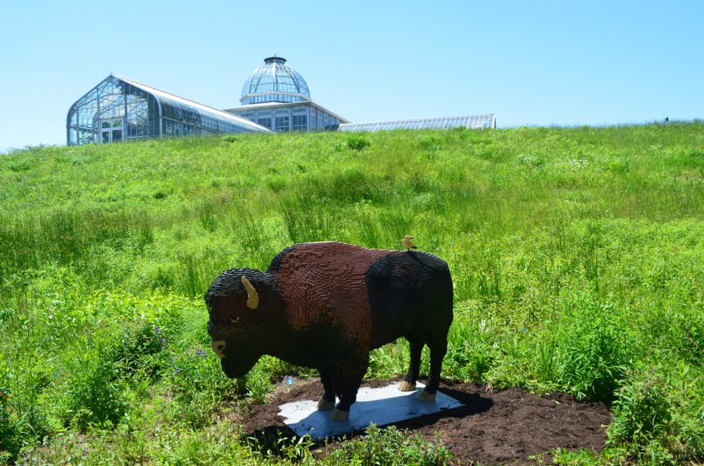 Bison and Conservatory
