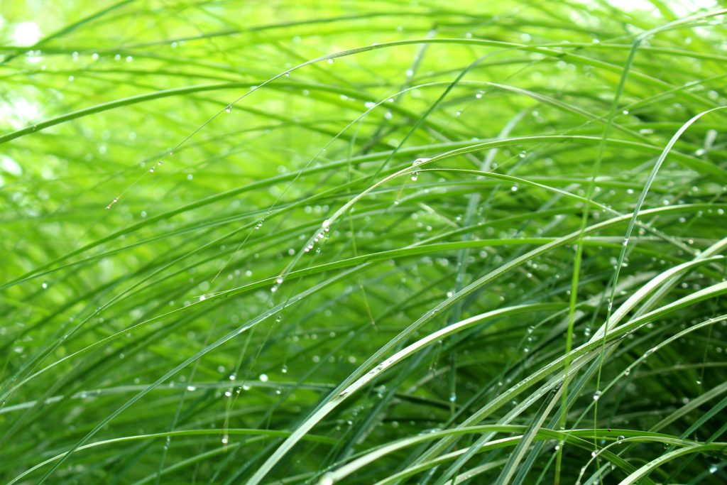 Dew drops are still clinging to grasses.