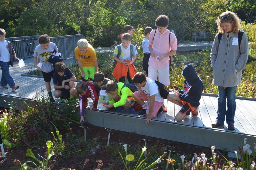 Tween boys looking at pitcher plants