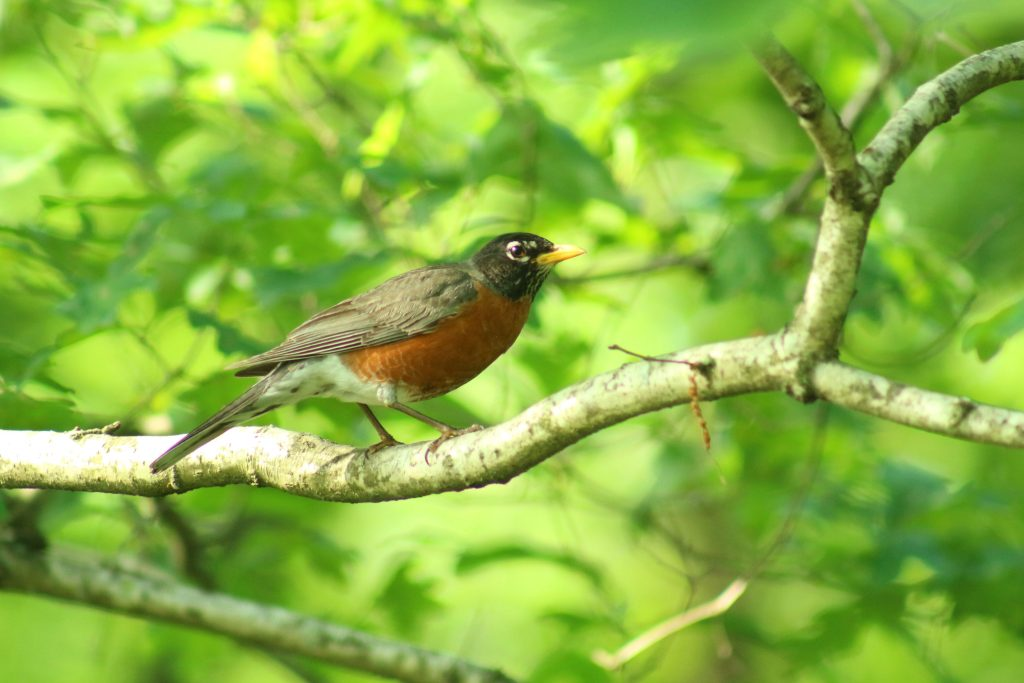 robin wildside walk