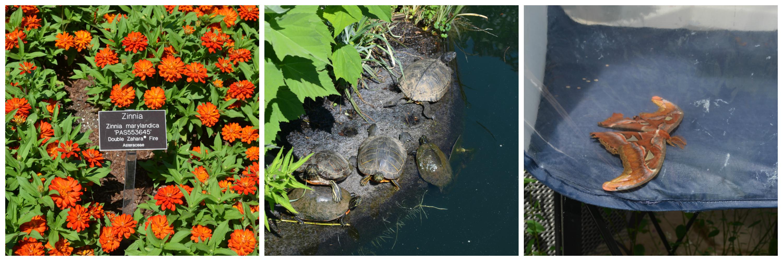 zinnias, turtle island, and atlas moth collage