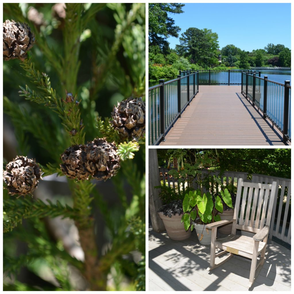 chance dock, rocking chair, and pine tree collage