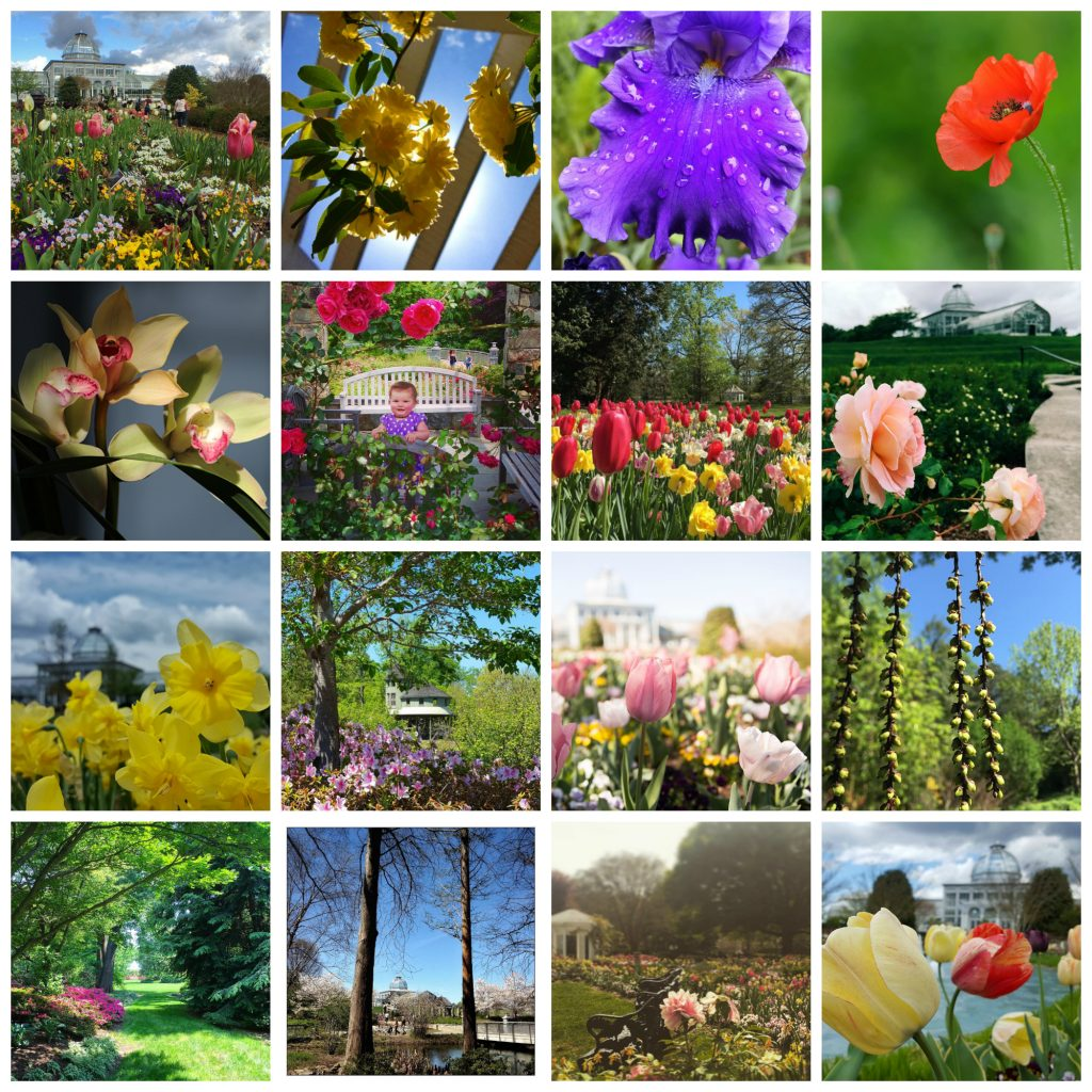 This is a collage showcasing the beautiful works of the 16 finalists for the 2016 A Million Blooms Instagram contest. Everyone has their own unique perspective, but it's obvious that you all share a love for this Garden. Thank you so much for your love and inspiration! Left to right, top to bottom: @rockytopphil @traytraytown @nifer1015 @filsaanu Mary Woodson, @nussmeg @katladyunc @multifacetedmama Bob Diller, @kng_photo @cghoyt @professorfigment @river3690 @paulateach @lauraflora63 @KevinDivins
