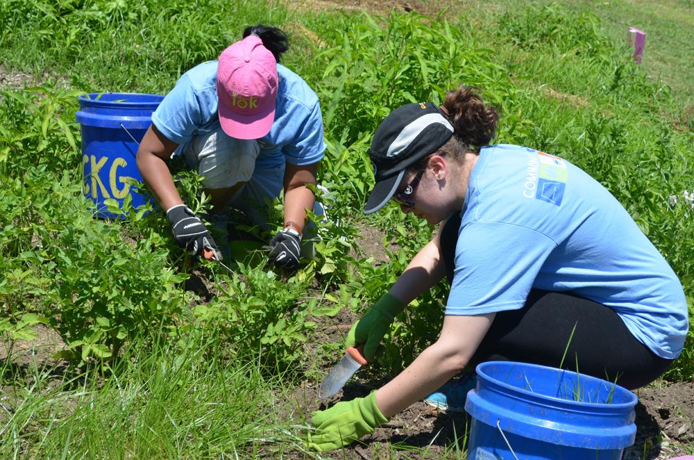 two carmax associates weeding the ckg