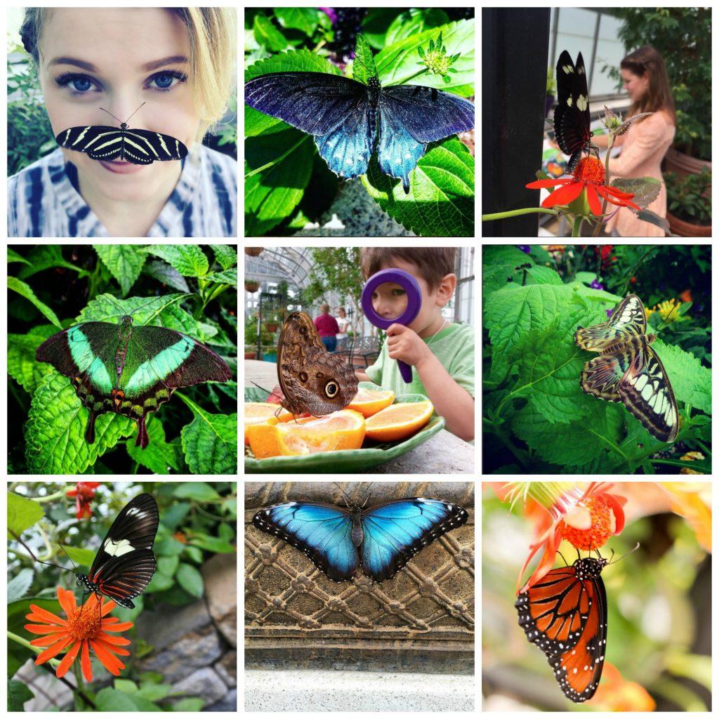 #bflies butterflies Instagram contest 2016