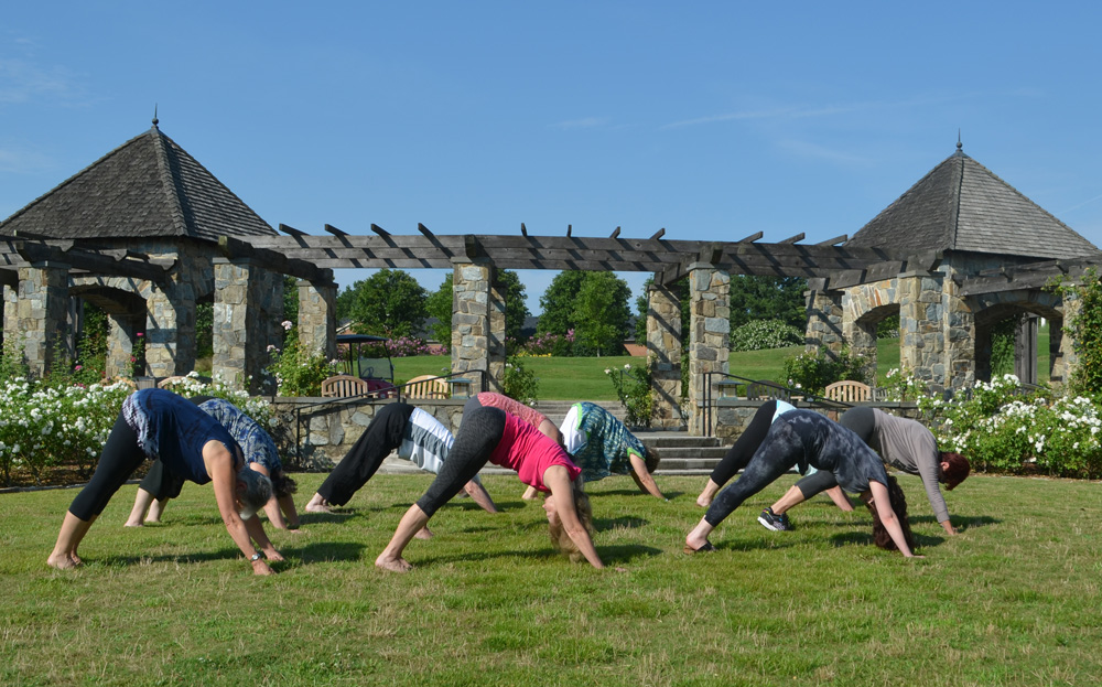 Downward Facing Dog yoga in the Rose Garden