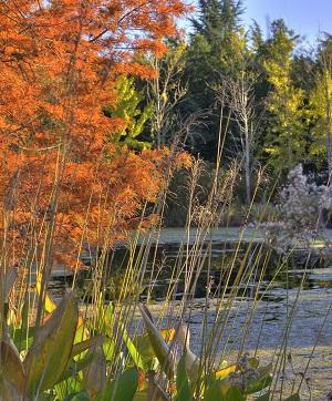 Gillette Forum on Landscape Design