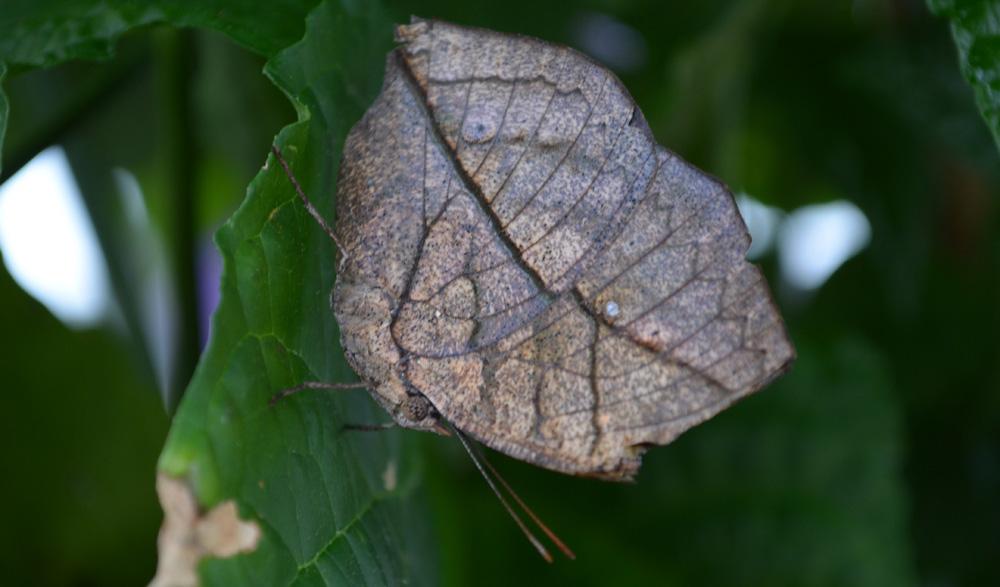 orange dead leag butterfly 1000