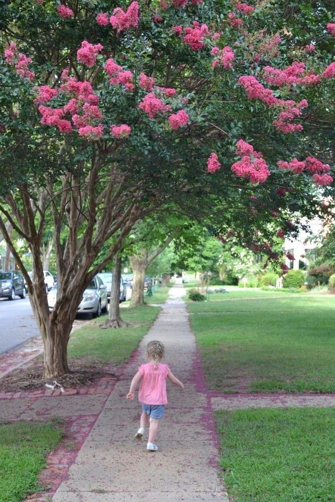 A child enjoys outdoor play along a tree-lined sidewalk.