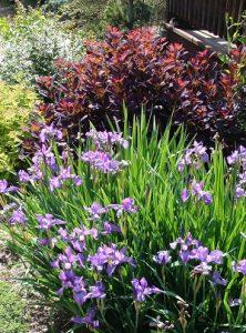 Beginner's Perennial Garden