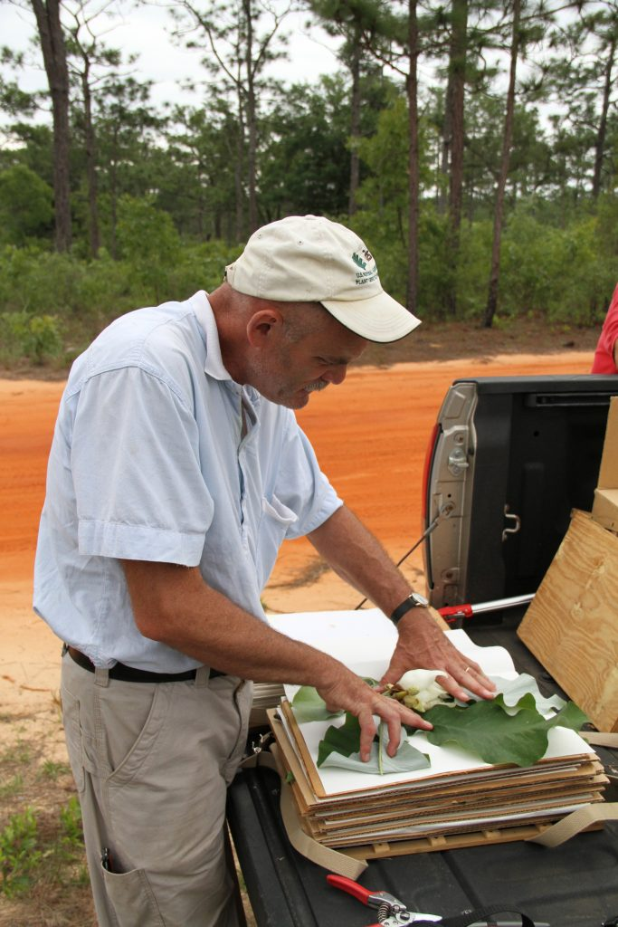 Kevin Conrad studies magnolia leaves that he collected in central Florida.