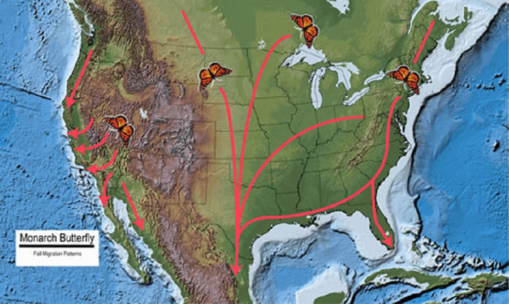 The fall migration route of the Monarch heading to its winter destination. Photo courtesy of the U.S. Forest Service.