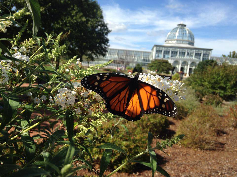Monarch migration lewis ginter botanical garden Lewis ginter botanical gardens