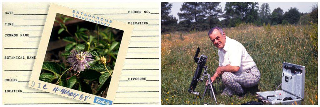 newton ancarrow wildflowers collage