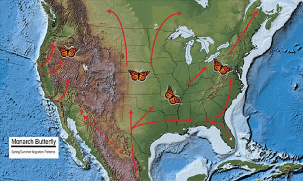 The Spring migration route of the Monarch on its way back from its winter destination. Photo courtesy of the U.S. Forest Service.