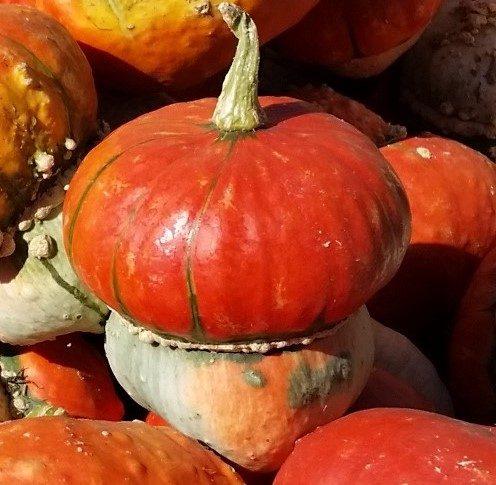 Tiny turk squash resembles a miniature squash wearing a pumpkin-like hat.