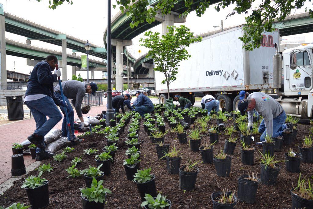 urban gardening in the city
