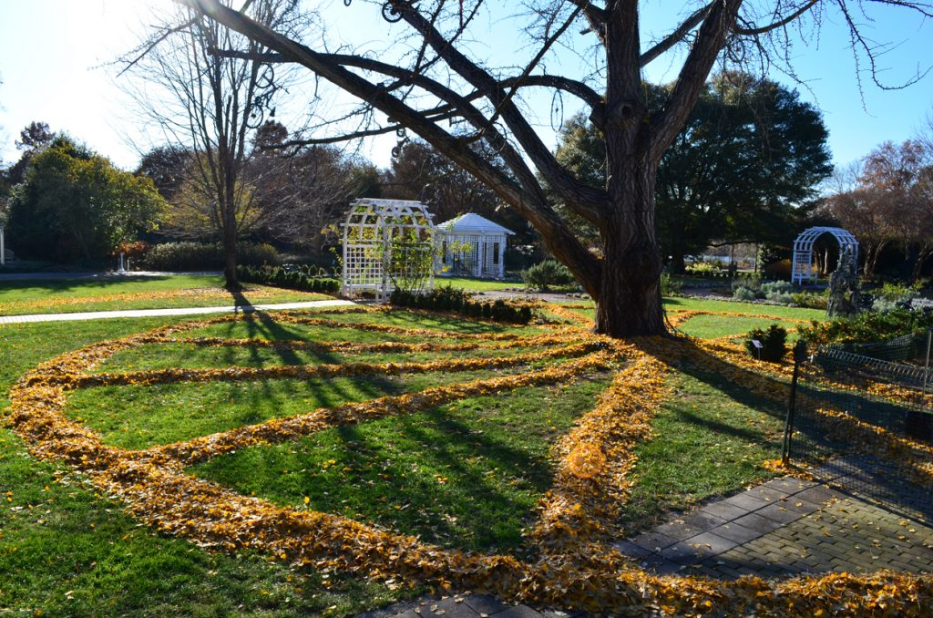 Ginkgo tree ephemeral environmental art exhibition