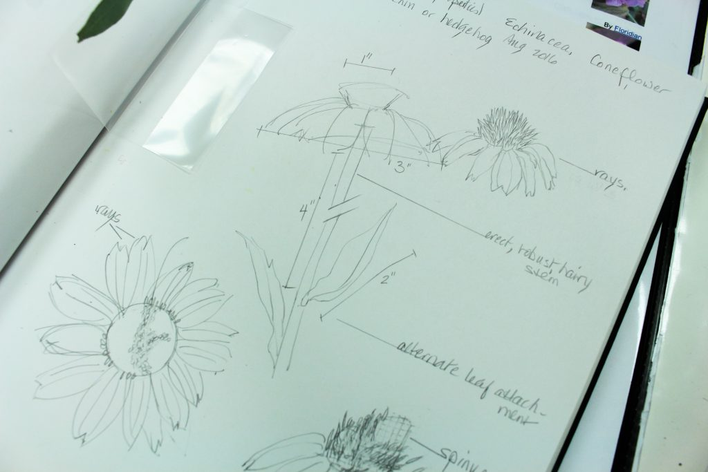 Botanical art: Botanical Illustration Instructor Hazel Buys' sketch book. Botanical illustration can be described as slow art. It takes time, patience, and meticulousness to produce a precise, exact, and expressive depiction of a specimen.
