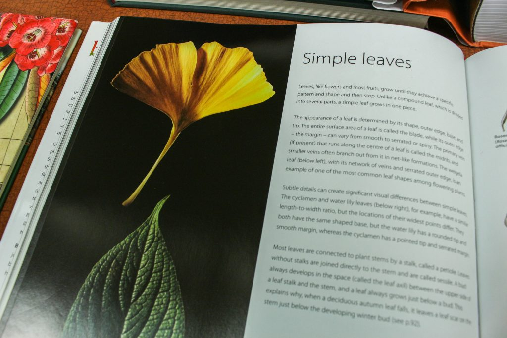 As part of the botanical art class, you learn to draw and paints all parts of a plant, from leaves and roots to buds and blooms.