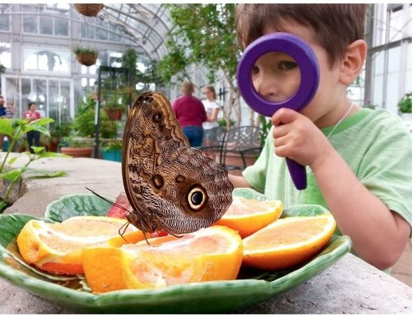Boy looking at giant owl butterfly through magnifying glass.