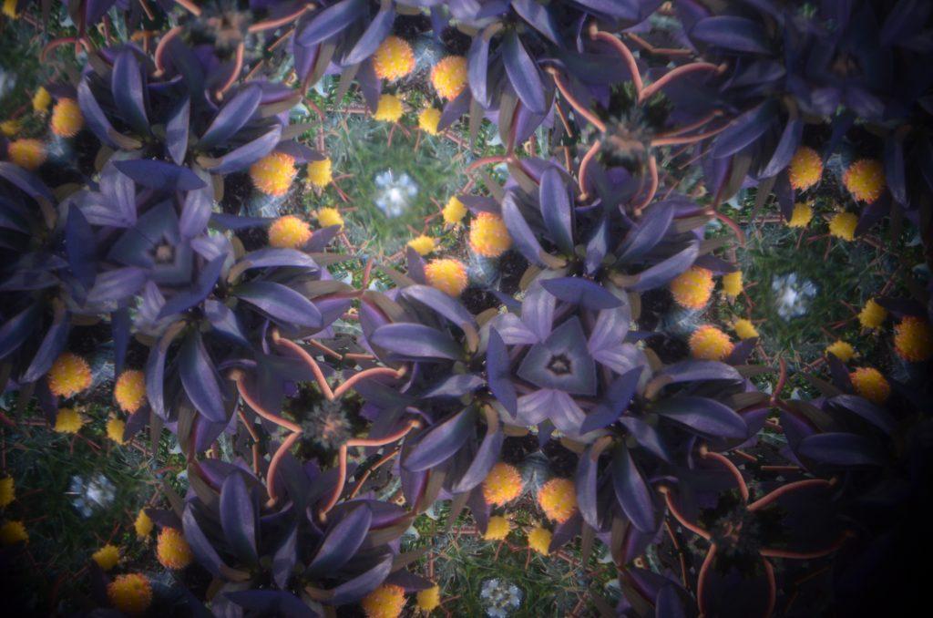 purple teleidoscope Image by Laurel Matthew.