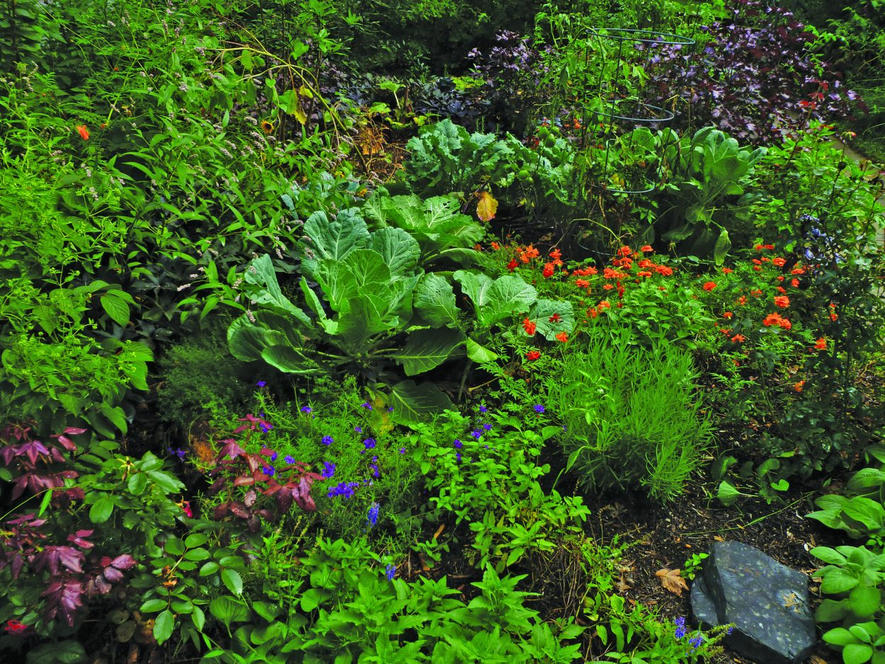 Landscaping like greens, flowers and herbs replace grass in Margie Ruddick's 'wild' front yard.