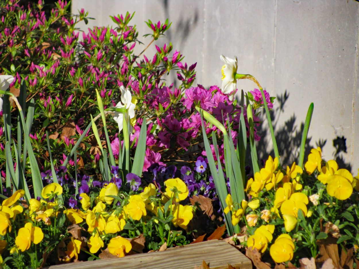 Bulbs, annuals and shrubs planted in the same bed will provide a source for floral arrangements.