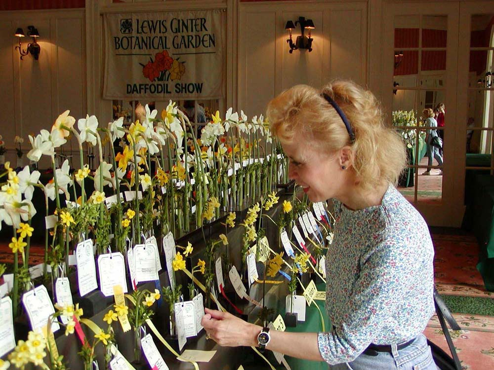 Daffodils in rows at a flower show