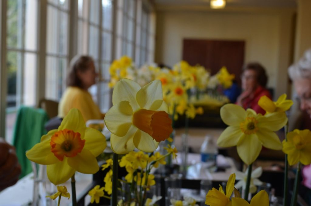 Daffodils at the Flowers Show