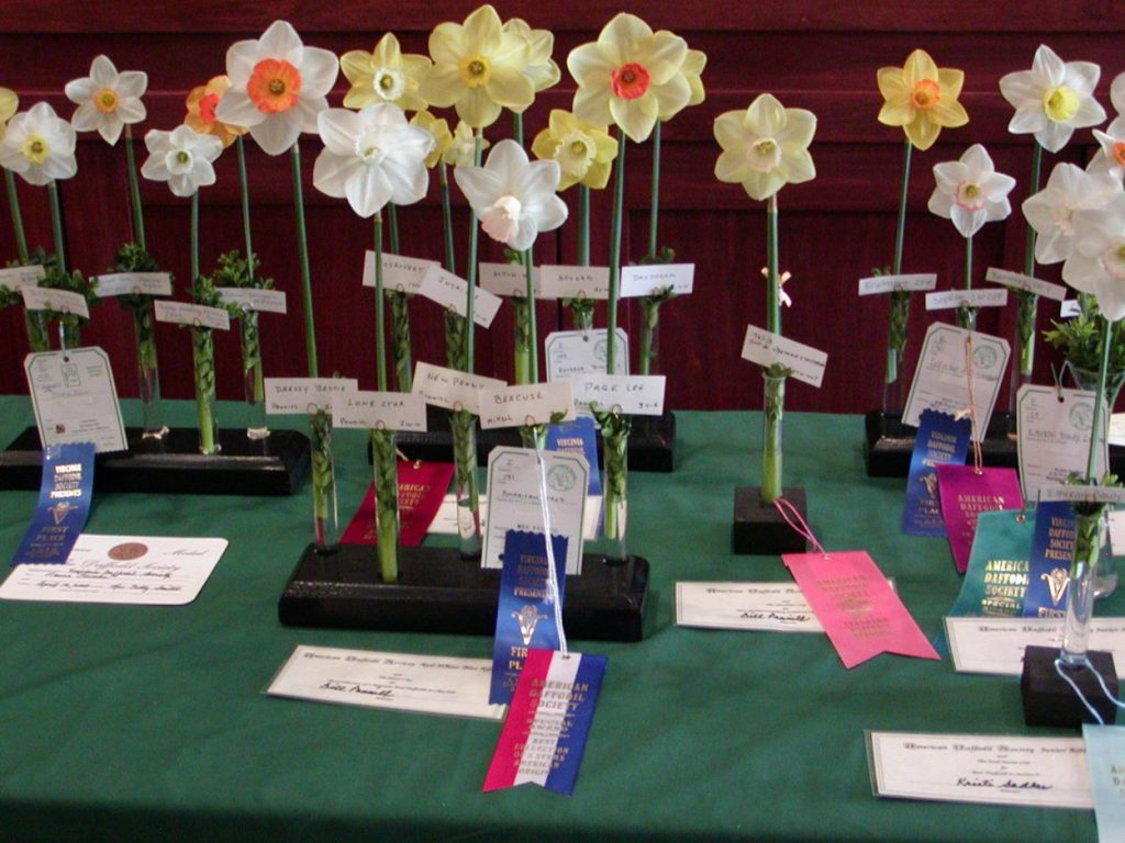 Flower show winners from the Daffodil Society Show and Sale