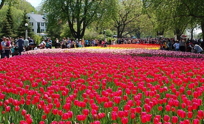 Canadian Tulip Festival - Public Gardens
