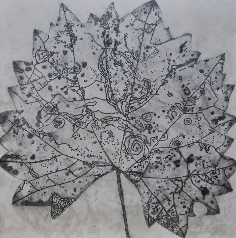 A graphite drawing of a single vitis leaf, detailing insect bites, holes from decay, and veins of the leaf. by Erica Lohan.