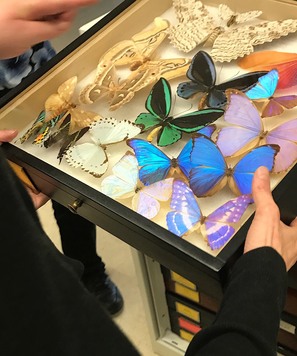 A vivid and distinct assortment of brightly colored and exotic pinned butterflies and moths.