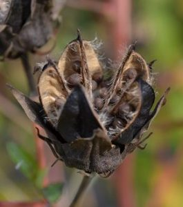 Intermediate Botany