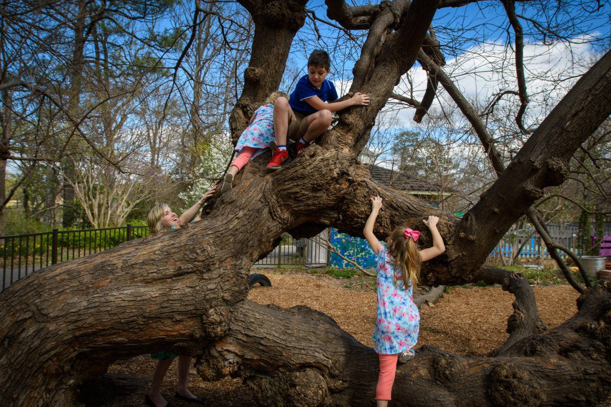 Children climb an old mulberry tree, which is okay since dead branches were removed and supportive props were installed.