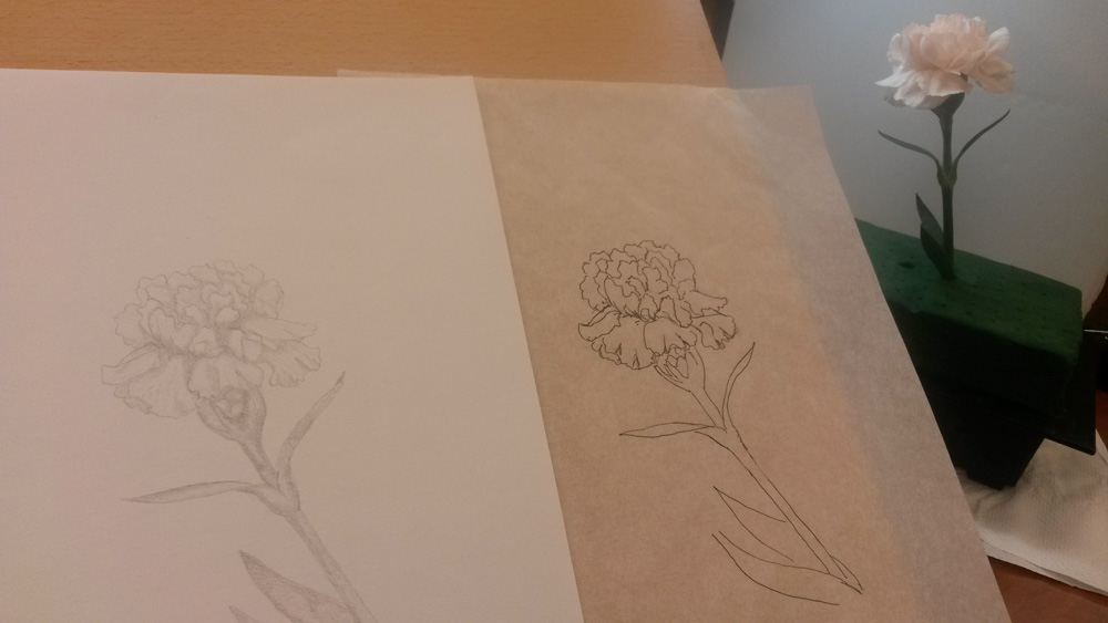 Drawing flowers -- a single blush pink carnation bloom sketched in pen and in graphite.