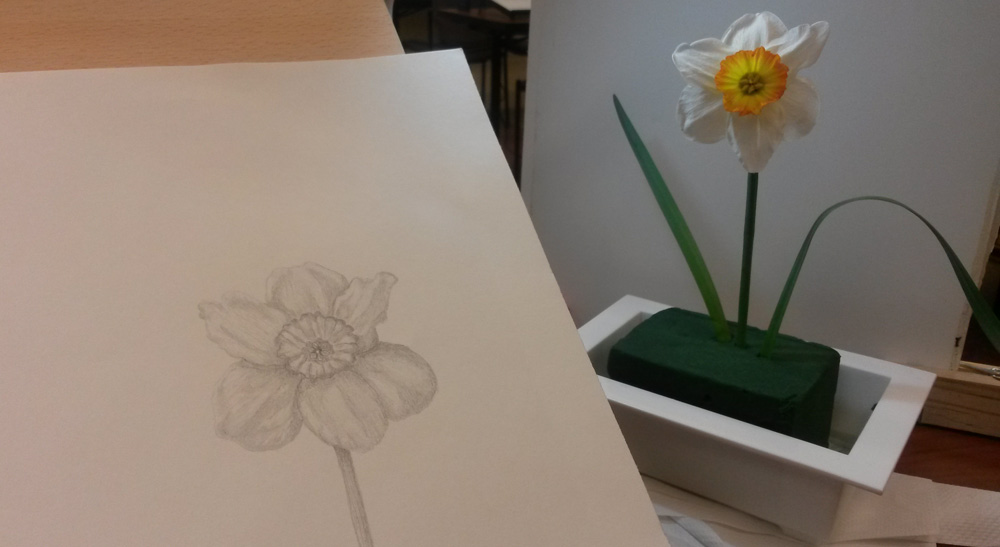 A white with orange center daffodil rendered in graphite pencil with accompanying live specimen. drawing flowers such as this Narcissus is a skill that takes practice.