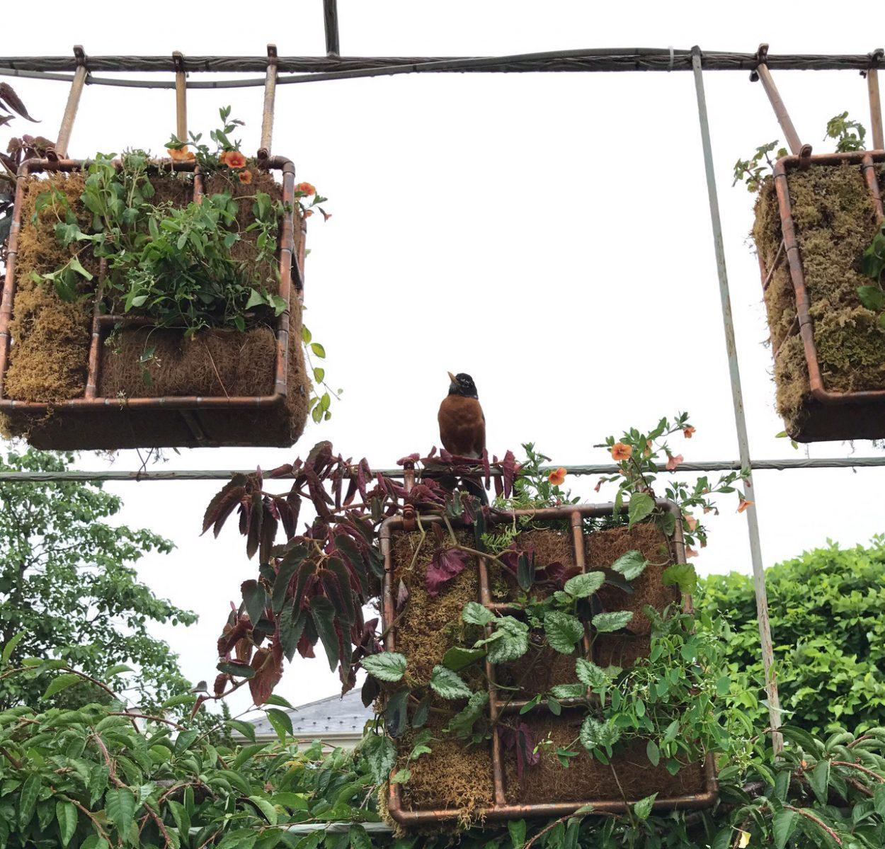 Wild Art: Locally grown art! Pictured Arbor Quilt