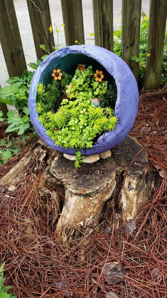 A broken, round pot is repurposed to grow sedum plants.