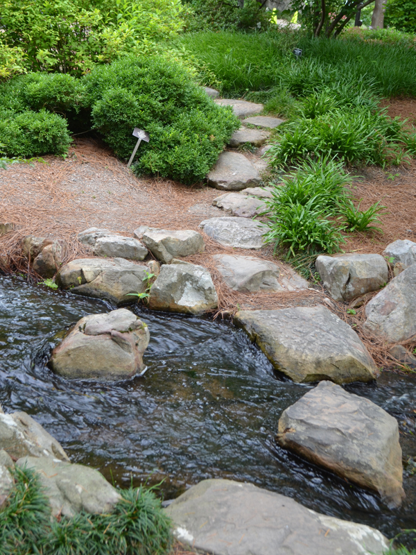 Path in front of Tea House with stepping stones