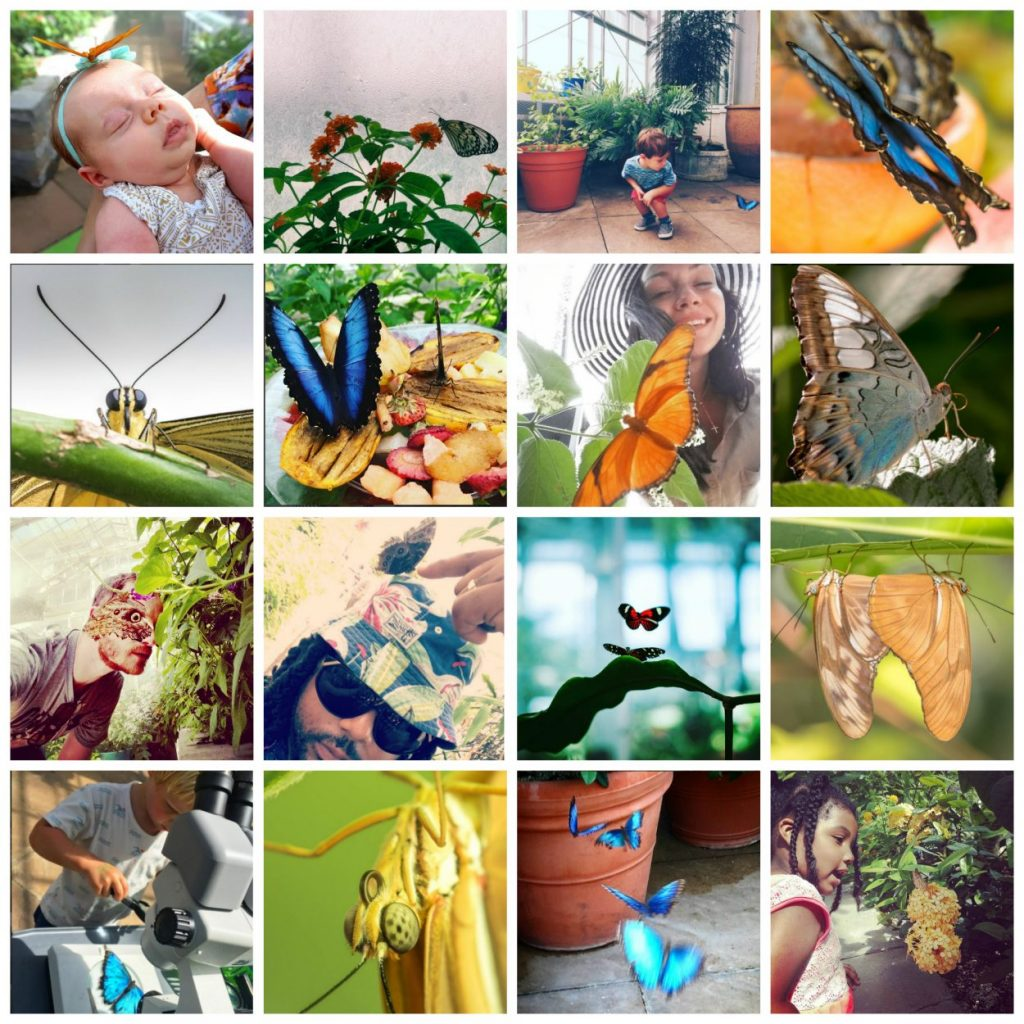Collage of images of submissions from Butterflies LIVE!