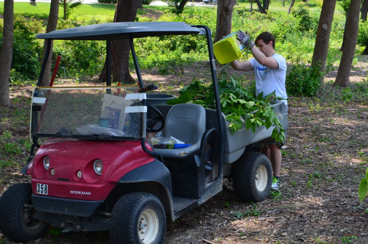 CarMax volunteer dumping weeds in a buggy for hauling