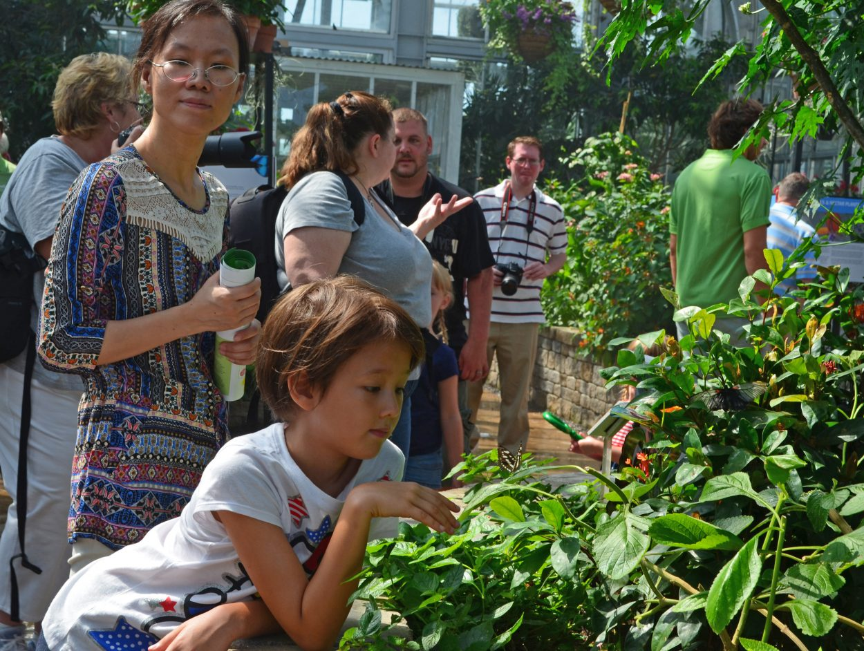 Child looking at butterfly at CarMax Free Fourth of July