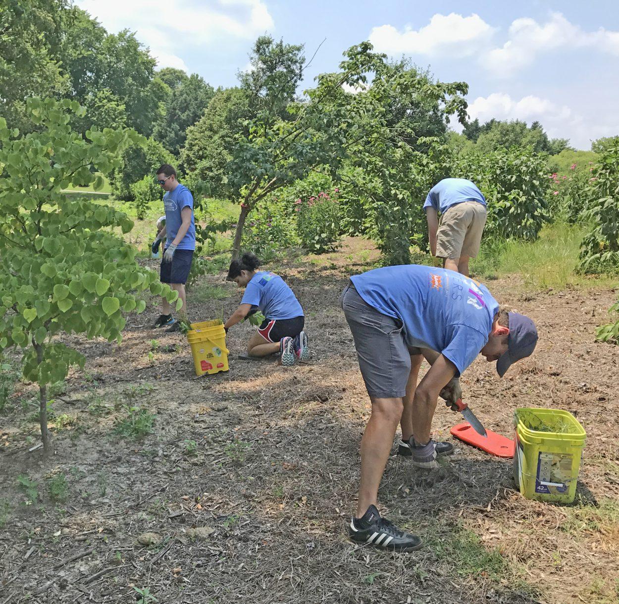 Enrique Mayor-Mora and team weeding.