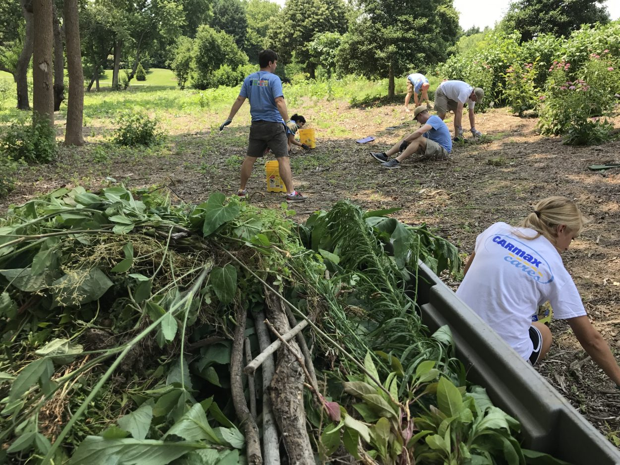 A huge pile of weeds that the CarMax volunteers managed to clear within the first hour of working.