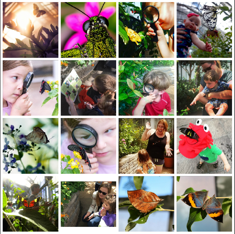 Sixteen of our favorite Butterflies LIVE! photos from the #Bflies Instagram contest.
