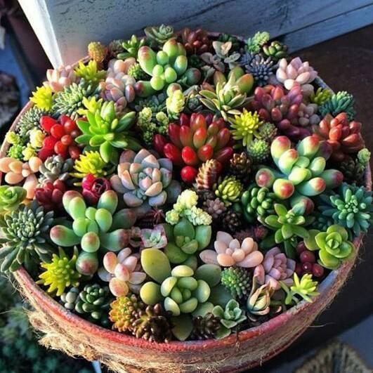 A container of assorted succulents is shown in different textures and colors.