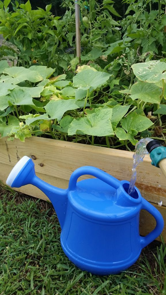 Gardening advice: A spouted water container helps direct water to the roots of plants, which helps prevent fungus and disease.