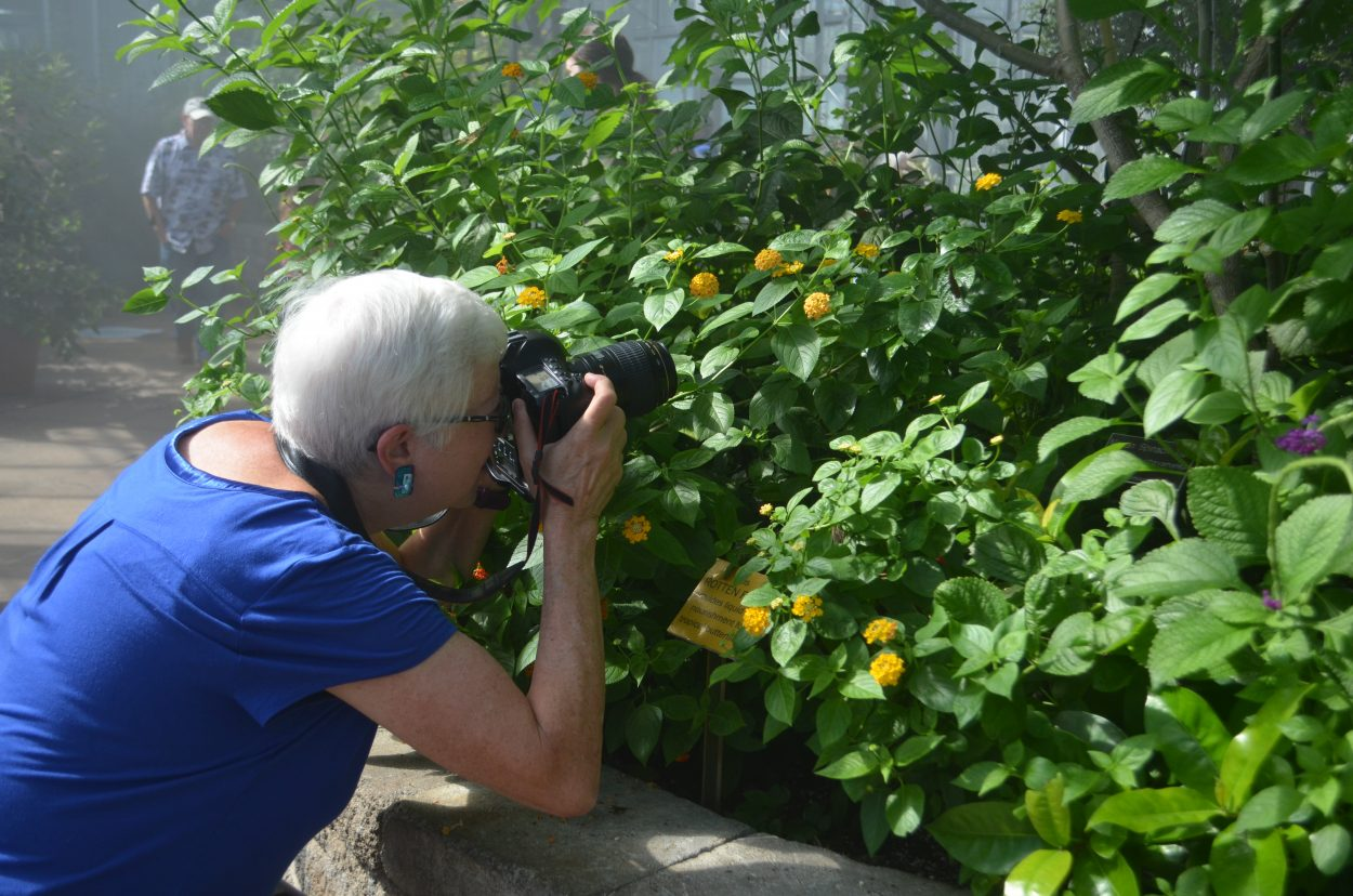 Schlesinger taking a photo of a butterfly